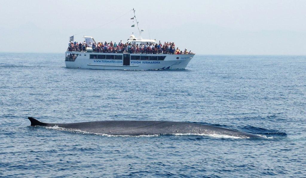 avistamiento-de-ballenas-y-delfines-en-el-estrecho-con-turmares
