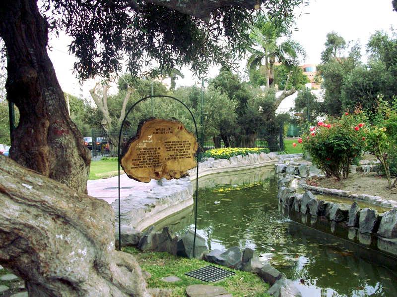 olive_park