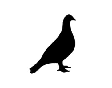 Paloma logo